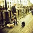 holga_holland_004
