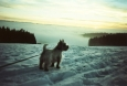 lca_winter_004