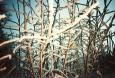 lca_winter_005